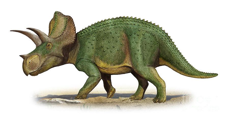 Ceratopsideos