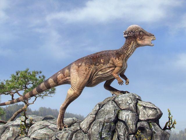 Paquicefalossauros