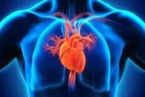onde fica o coração?