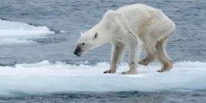 aquecimento global e efeito estufa
