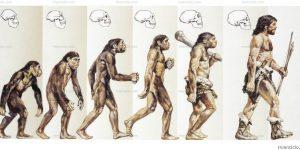 como ocorre a evolução?