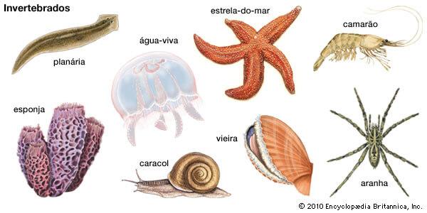 animais invertebrados exemplo