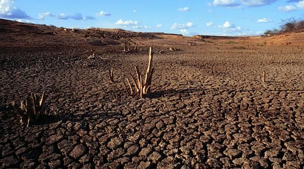 Caatinga: vegetação, clima, animais e mais