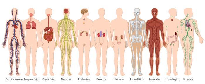 divisão do corpo humano em sistemas