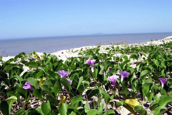Mata Atlântica: características, vegetação, clima e mais
