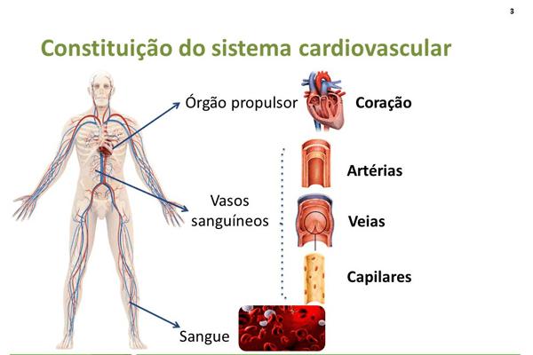 Orgaos Do Corpo Humano Desenho De Onde Ficam E Como Funcionam
