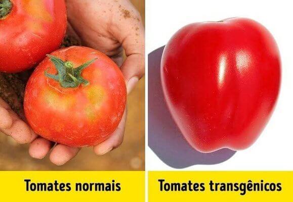 alimento natural e transgênico