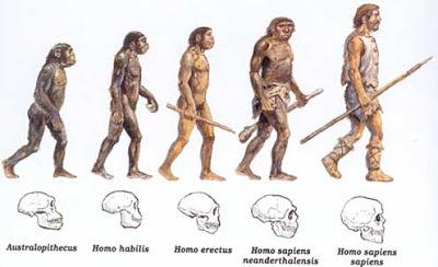 darwinismo macaco