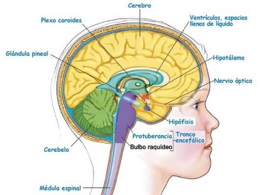 nervoso sistema