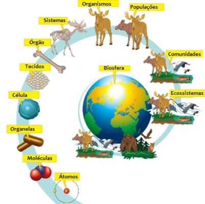 organização dos ecossistemas