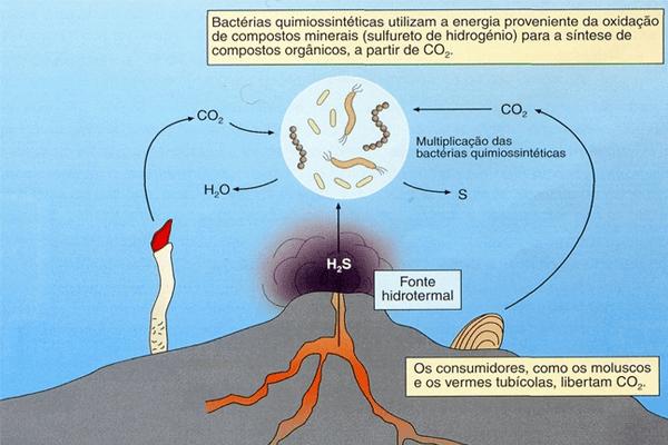 quimiossíntese bactérias nitrificantes
