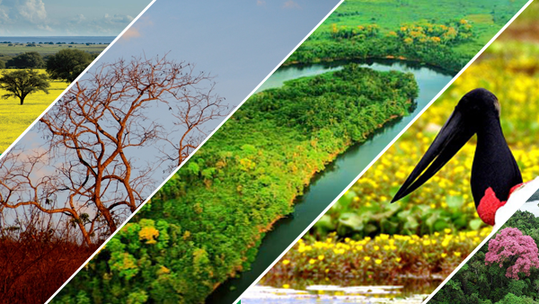 biomas Brasil