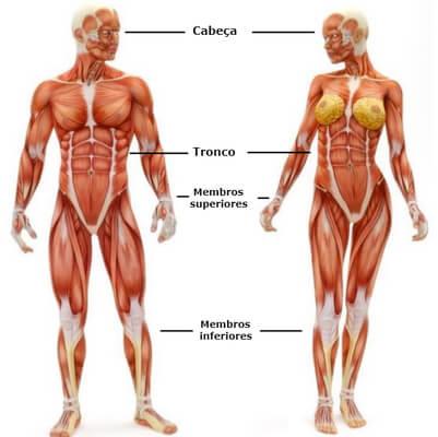corpo humano membros
