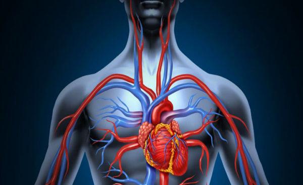 Sistema cardiovascular2