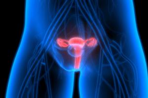 Sistema reprodutor feminino2