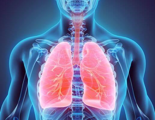 Sistema respiratório 3