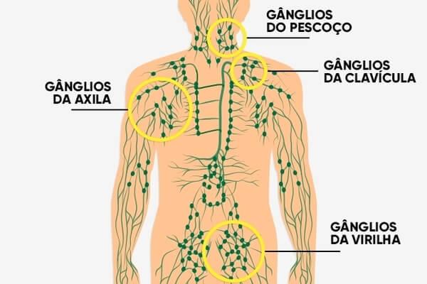 O o sistema sistema como homeostase com a imunológico circulatório para trabalha manter