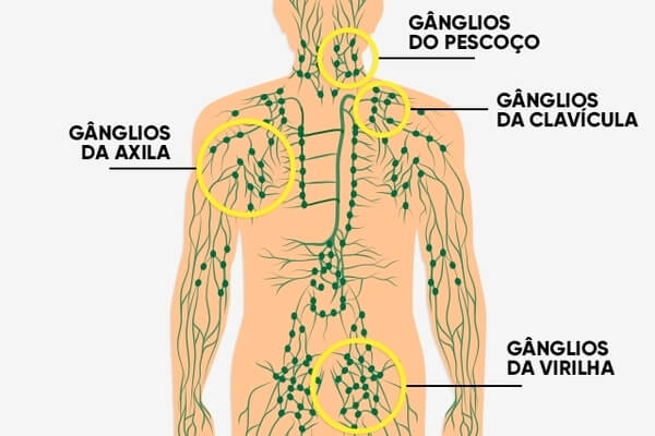 sistema linfático2