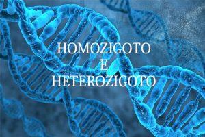 homozigoto heterozigoto