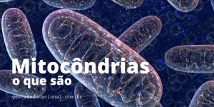Mitocôndrias o que são?